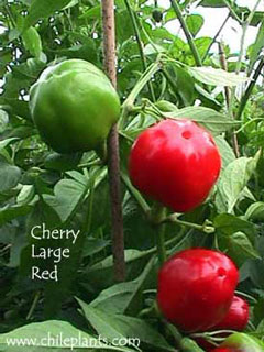 CHERRY LARGE RED