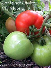 Container Choice VFF Hybrid Tomato Plants