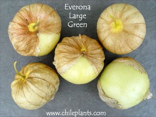 EVERONA LARGE GREEN