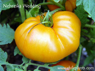NEBRASKA WEDDING